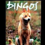 DVD Dingo Australien Freund oder Feind