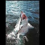 Poster Hai , jump, 40x50 cm