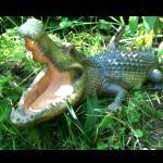 Krokodil  für den Gartenteich  40cm