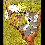 dickes Koala Kuckloch  Kinder Buch   A4