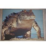 Poster Leinen Druck Krokodil 40x30cm