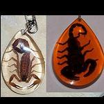 Schlüsselanhänger mit echten Scorpion