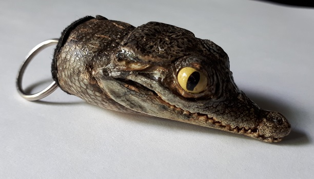 kleiner echter Krokodil Kopf Schlüsselanhä