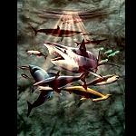 T Shirt Sharks Underwater M Farbe Petrol