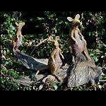 Känguru 3er Gruppe auf Treibholz
