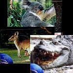 Holz Puzzle Tiere Australien 29cm -25Teile