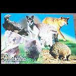 Postkarte Tiermotive Australien