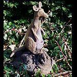 Känguru  auf Treibholz