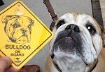 Schilder Hunde Rasse 12cm