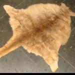 Kaenguru Fell orig. ca 155-165x91cm weich