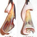 Kette aus einer Seemuscheln gefertigt