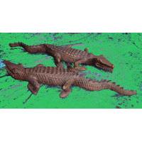Krokodil Teak 65 cm
